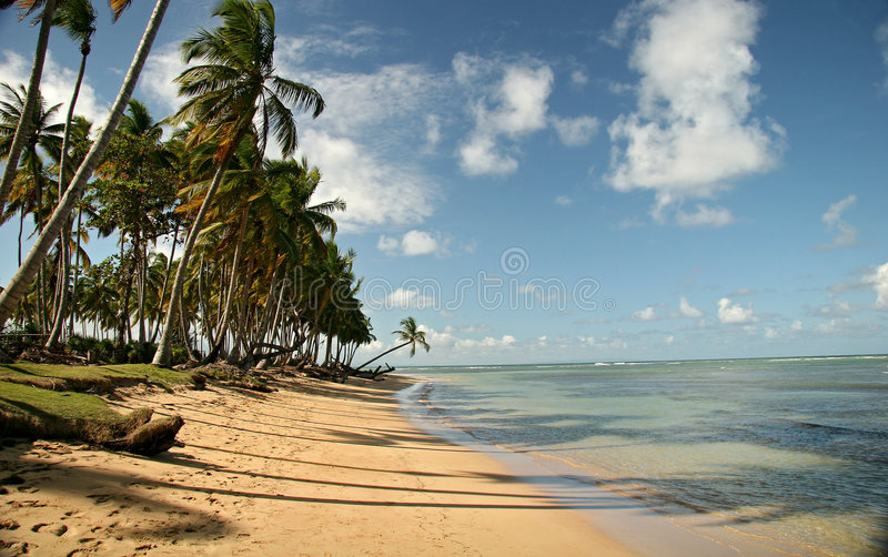 Palm Trees On The Beach stock images