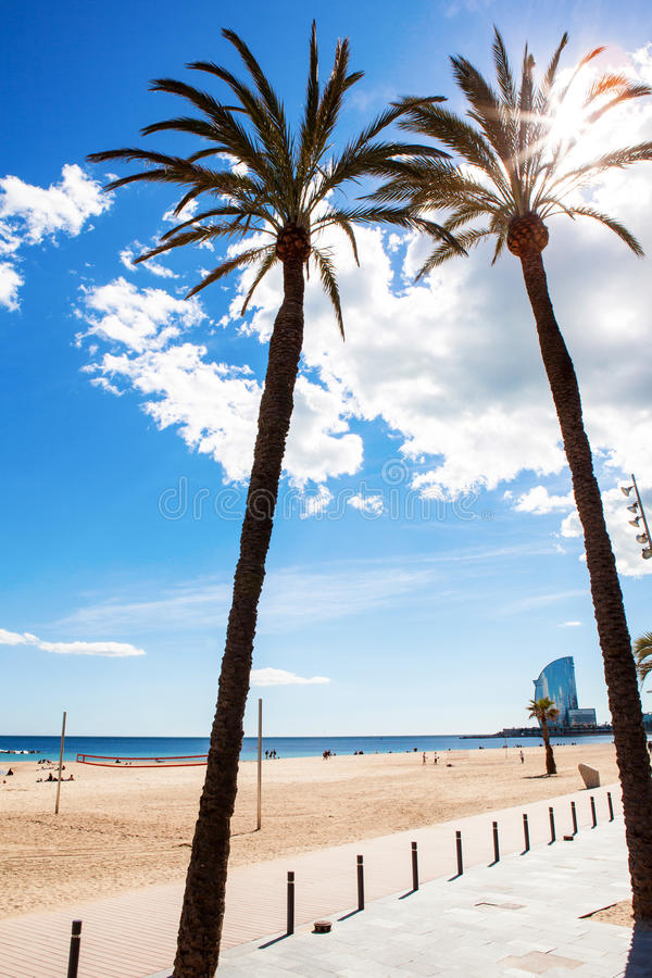 Download Palm trees on the beach stock photo. Image of relaxation - 33392402