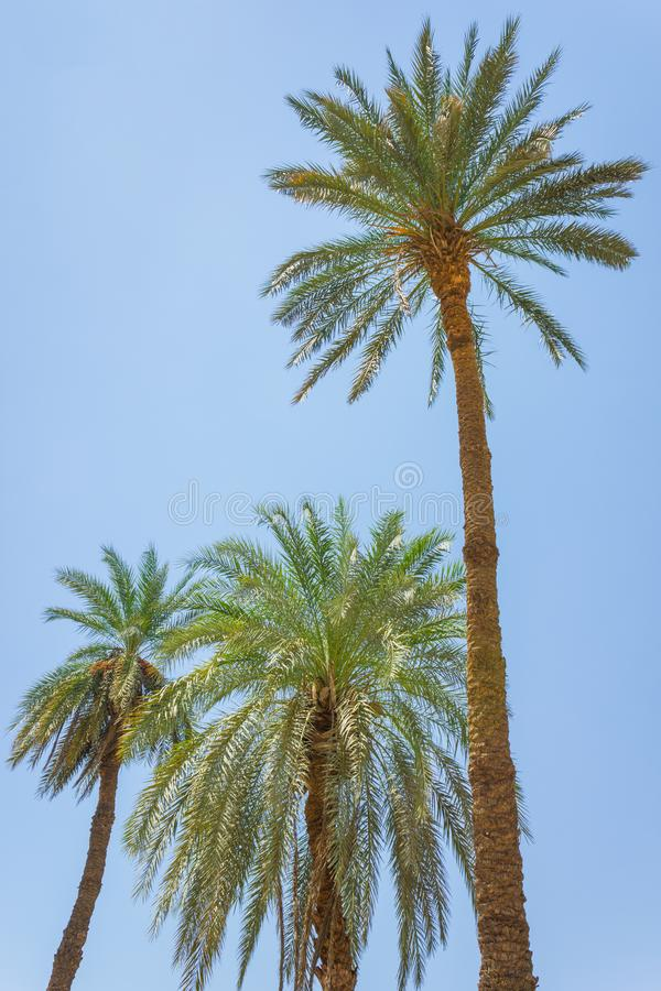Palm trees on the beach royalty free stock photos