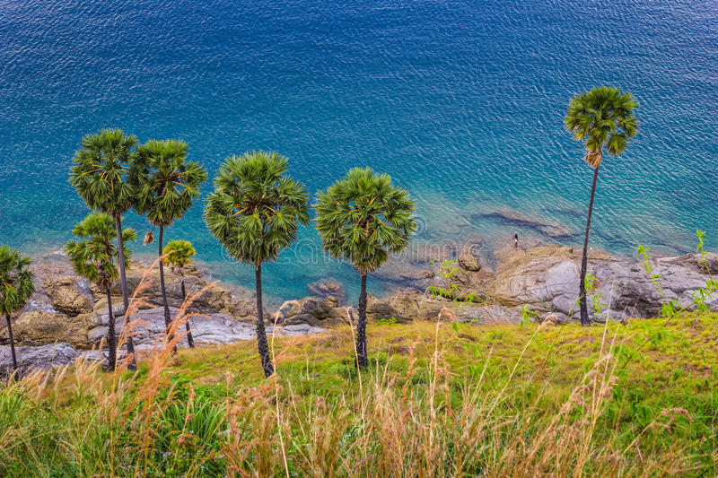 Download Palm Trees On The Beach On The Island Of Phuket Stock Photography - Image: 33567992