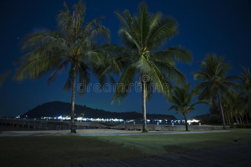 Download Palm Trees On The Beach At Night Stock Photo
