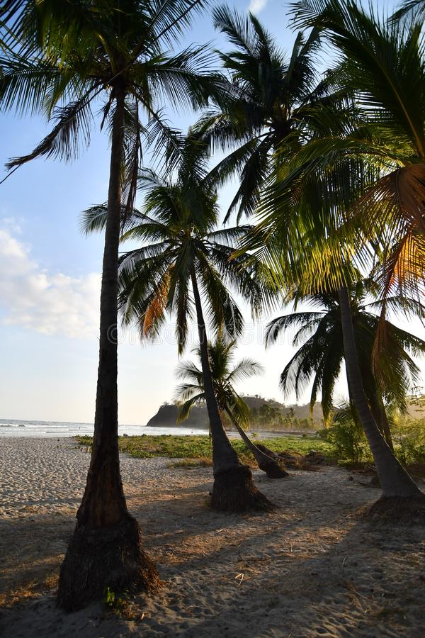 palm trees on the beach, photo as a background , taken in Samara, Nicoya, Costa rica central america stock photos