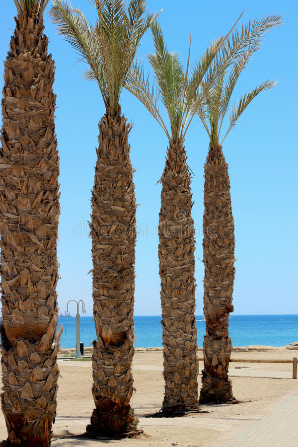Palm trees on the beach royalty free stock photography