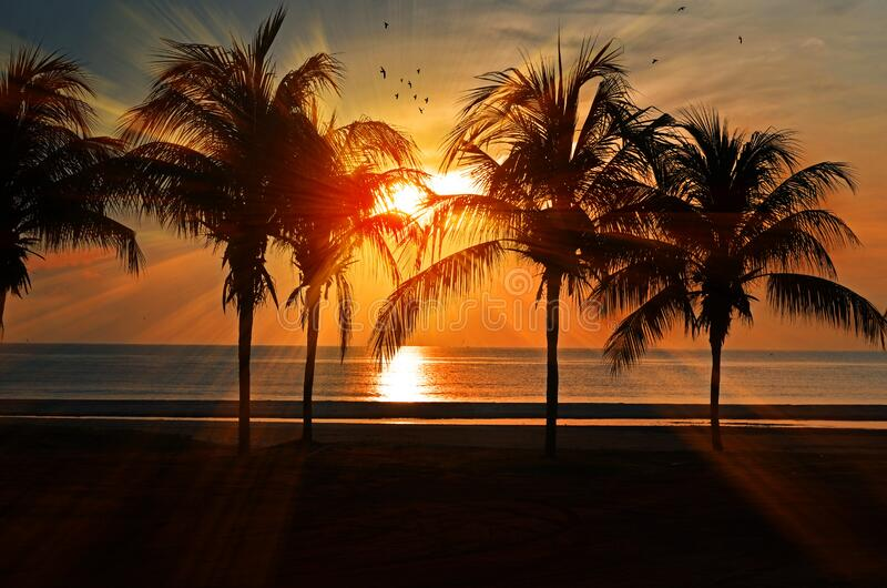 Palm trees on beach at sun set royalty free stock photo