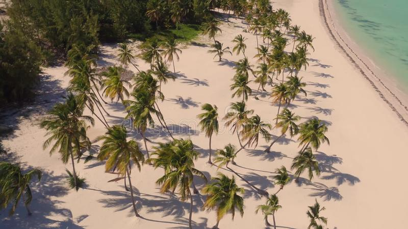 Palm trees on the beach view from above royalty free stock photos