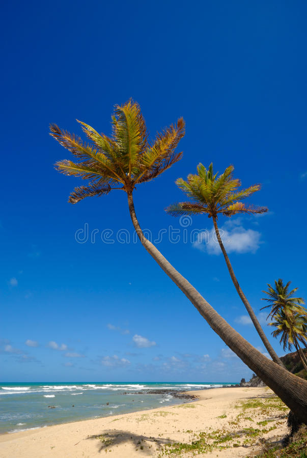 Download Palm Trees And A Beautiful Beach Stock Photo - Image: 12120874