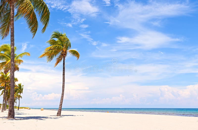 Palm trees on a beautiful sunny summer afternoon royalty free stock photo