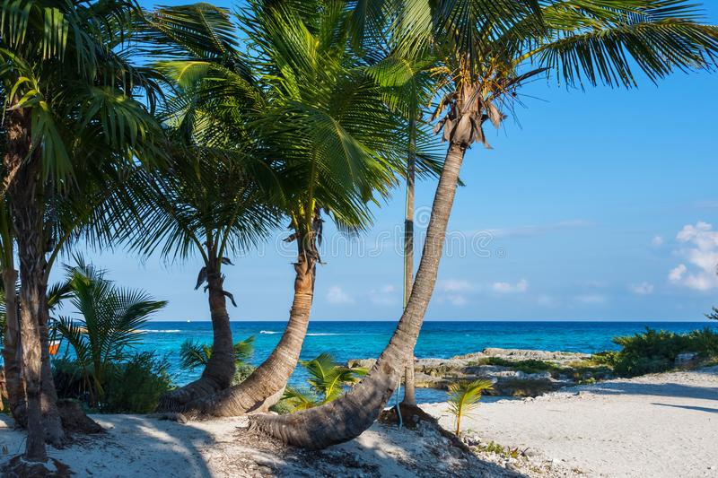 Palm trees. Beautiful tropical landscape, blue sky and turquoise sea in the background. royalty free stock photography