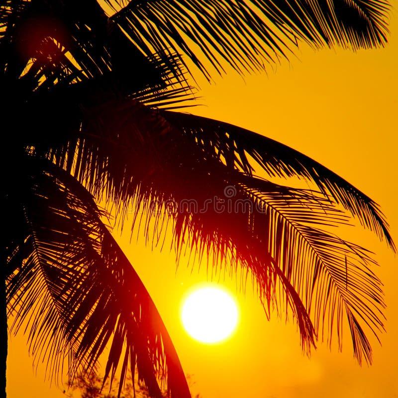 palm trees and big sun stock photo