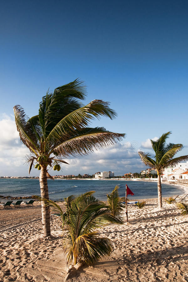 Free Palm Trees Blowing On A Windy Beach Royalty Free Stock Photos - 14025138
