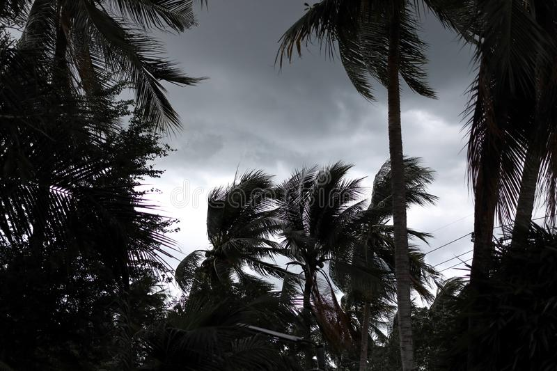 Palm trees blowing in the wind during hurricane royalty free stock image