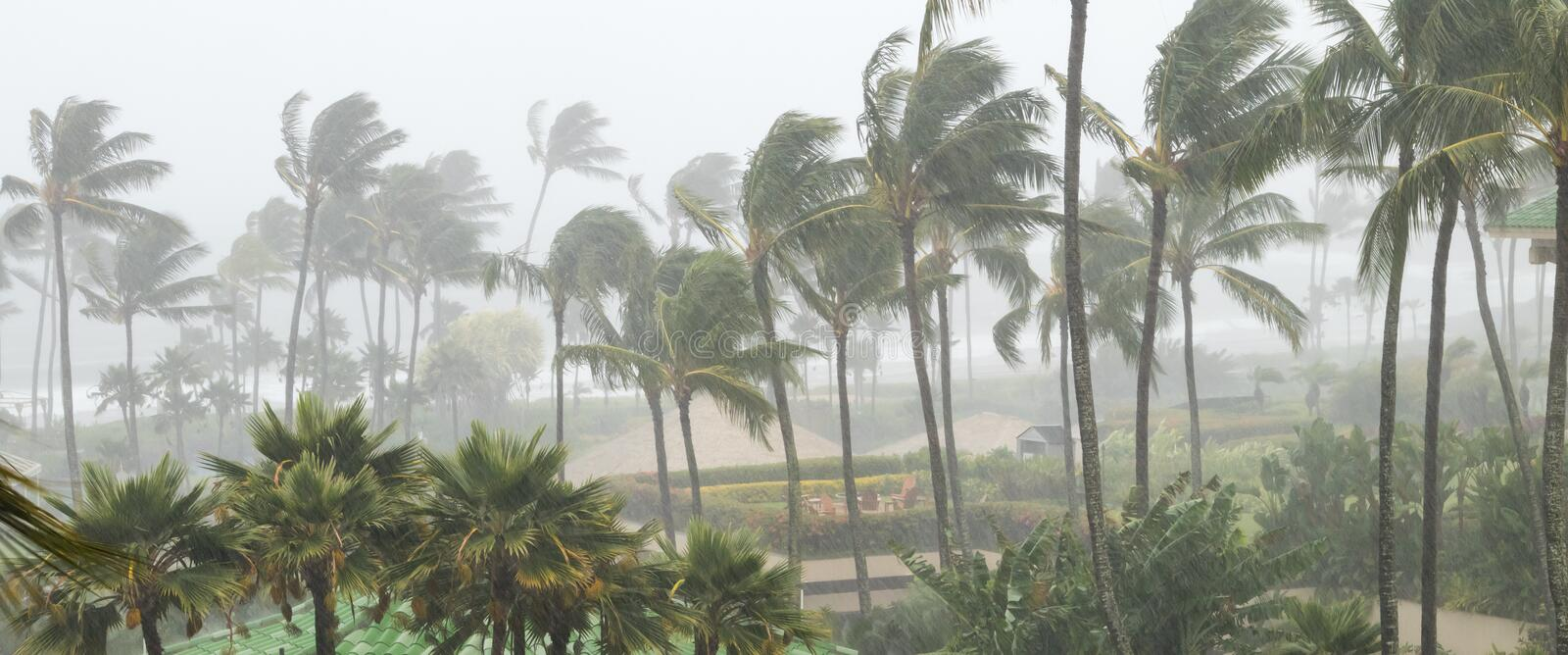 Palm trees blowing in the wind and rain as a hurricane nears royalty free stock image