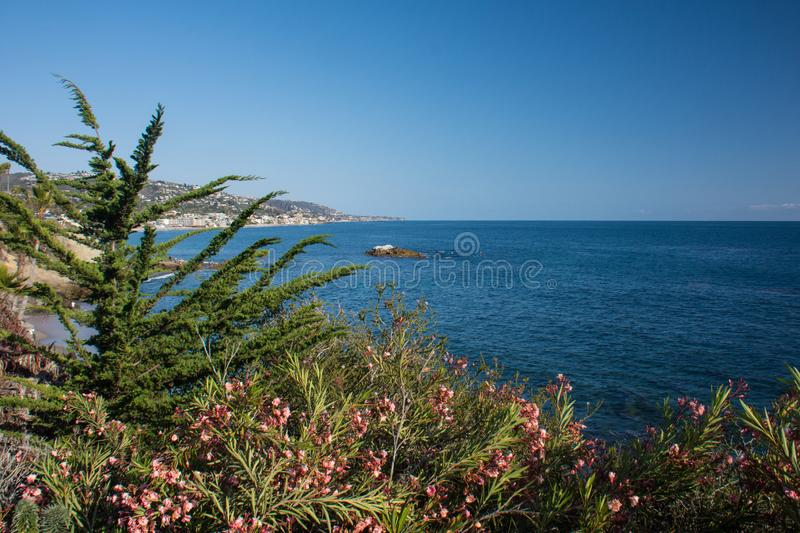 Palm trees and the blue Pacific Ocean view in Laguna Beach, California, in Southern California royalty free stock images