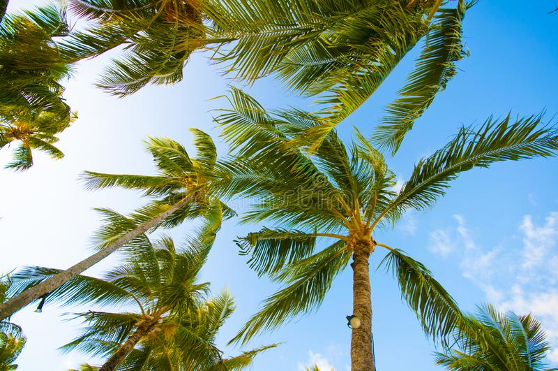 Palm trees and Blue skies. View of palm trees and blue skies from the island of bora bora in the French Polynesia stock photo