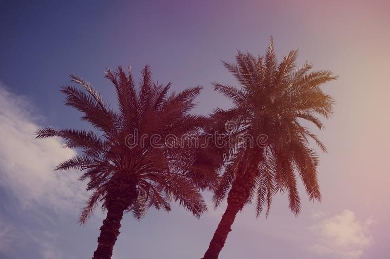 Palm trees and blue sky background stock photos