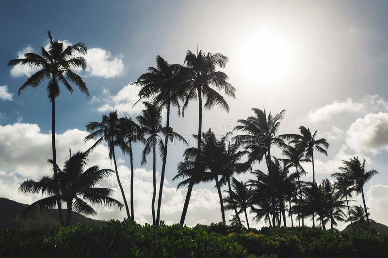 Palm trees and blue sky background at tropical beach of Oahu stock images