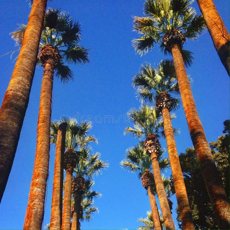 L.A. royalty free stock photos