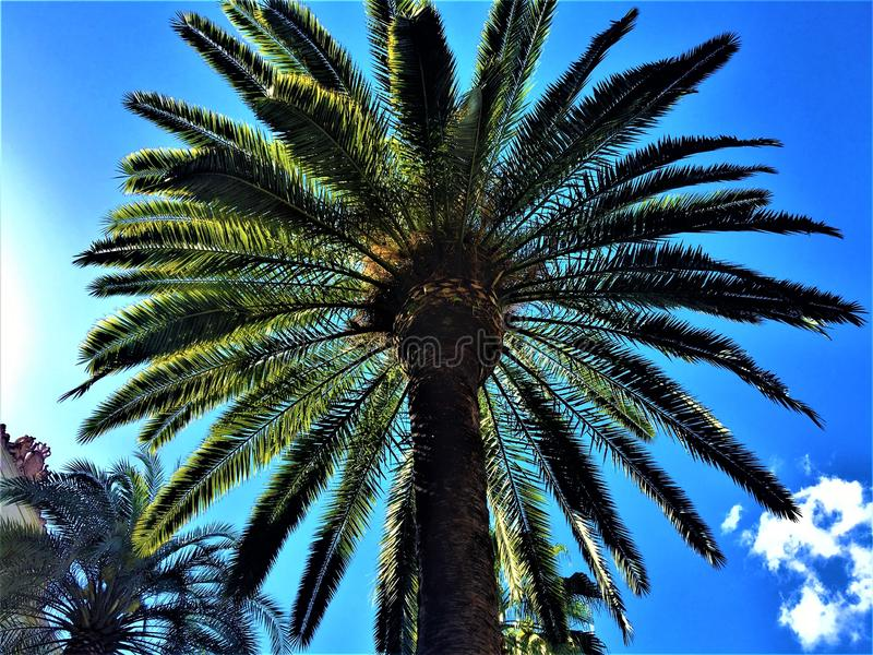 Palm trees, blue sky and light in Barcelona, Spain royalty free stock photography