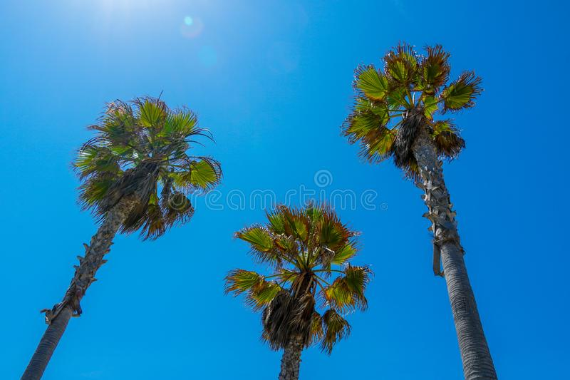 Palm trees with blue sky. Summer nature scene royalty free stock images