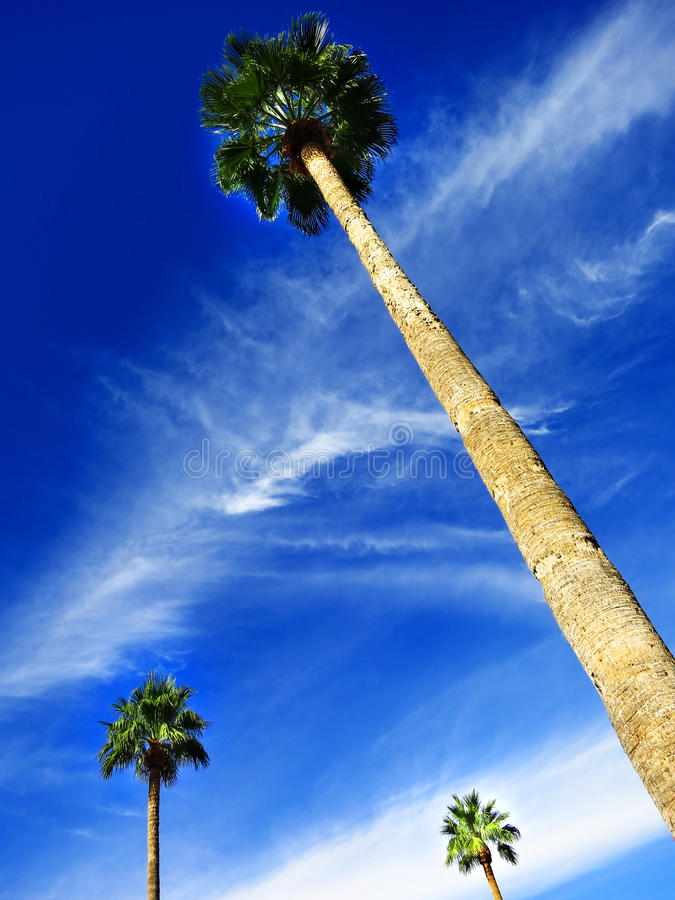 Palm Trees in Blue Sky stock photography