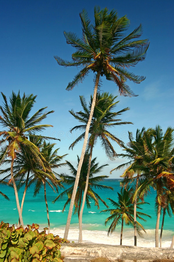 Palm trees at bottom bay royalty free stock photo