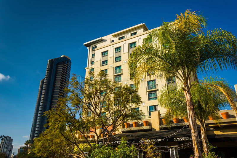 Palm trees and buildings in San Diego, California. Palm trees and buildings in San Diego, California stock photo