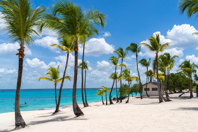 Palm Trees at Catalina Island in Dominican Republic.  stock photos