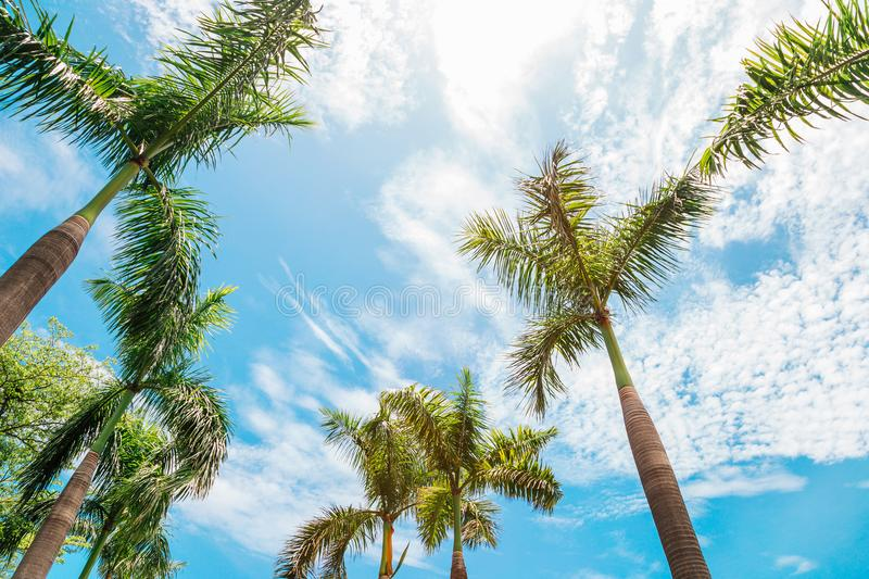 Palm trees at Central Park in Kaohsiung, Taiwan. Nature scenery royalty free stock photo