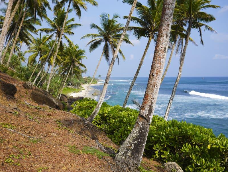 Palm Trees Close To Mirissa Beach, Sri Lanka Stock Images