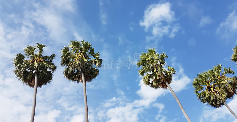 Palm trees with cloudy in fresh blue sky in a noon. View stock image