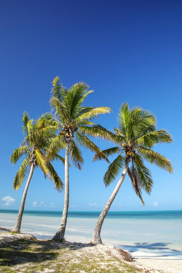 Palm trees on the coast of Ouvea lagoon on Ouvea Island, Loyalty Islands, New Caledonia. The lagoon was listed as Unesco World Heritage site in 2008 stock image