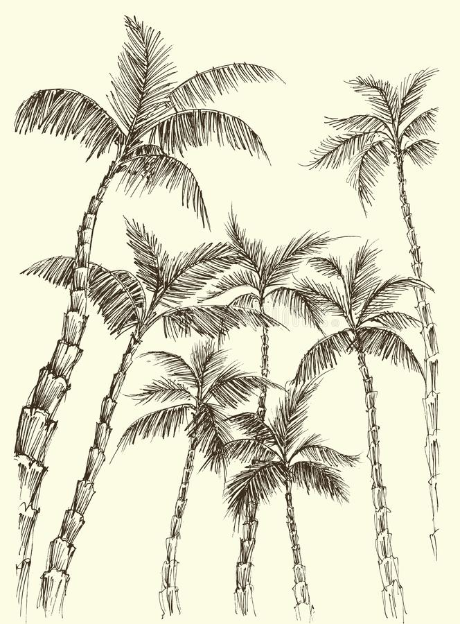 Palm trees, coconut background stock illustration