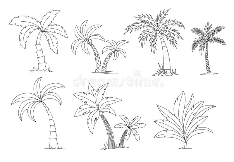 Palm trees coloring book. Beautiful vectro palma tree set vector illustration.  royalty free illustration