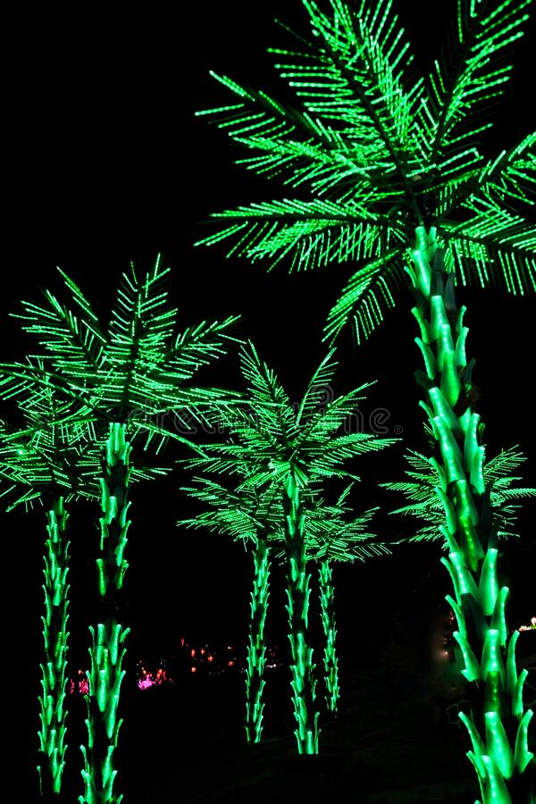 Palm trees decorated with green LEDs. Follow the shape of the tree royalty free stock photography