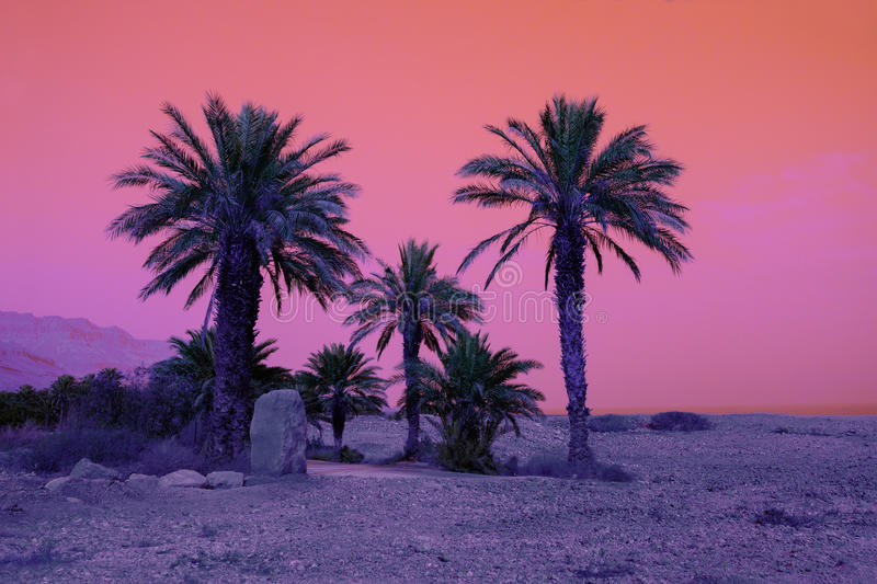 Palm trees in dessert. Retro background with palm trees in dessert stock images