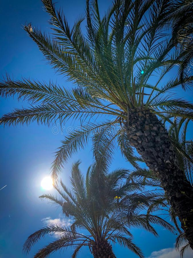 Palm trees in a dreamlike environment. And Blue sky stock photos