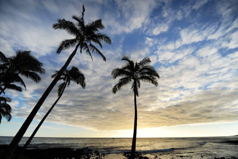 Palm trees at dusk royalty free stock photos