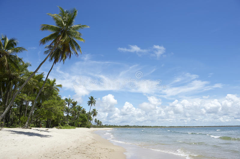 Palm Trees Empty Tropical Brazilian Beach royalty free stock images