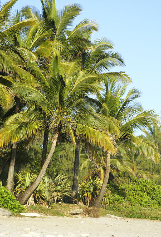 Download Palm trees stock photo. Image of wild, green, paradise - 32914120