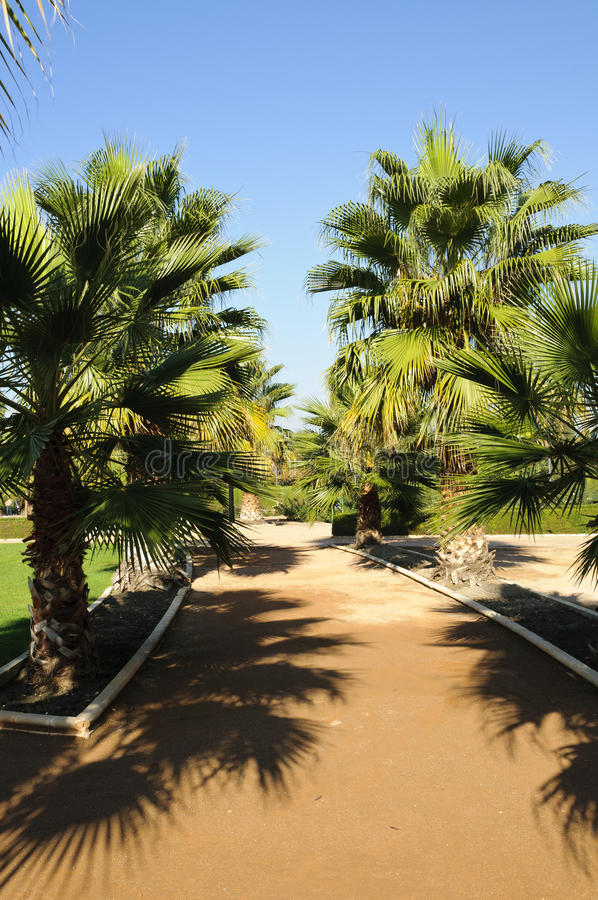 Palm trees in Federico Garcia Lorca Park stock photography
