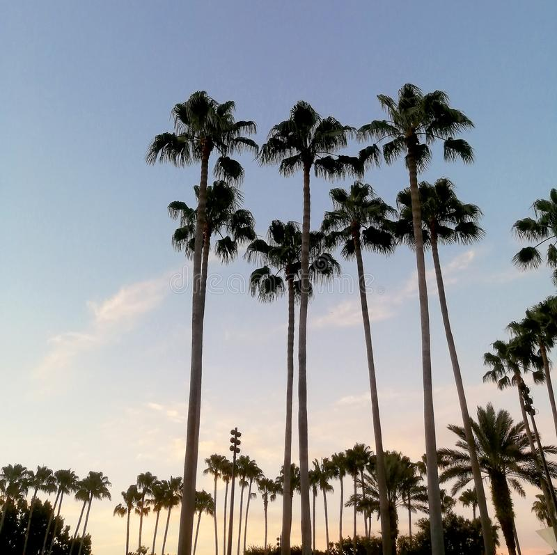 Palm trees in Florida stock images