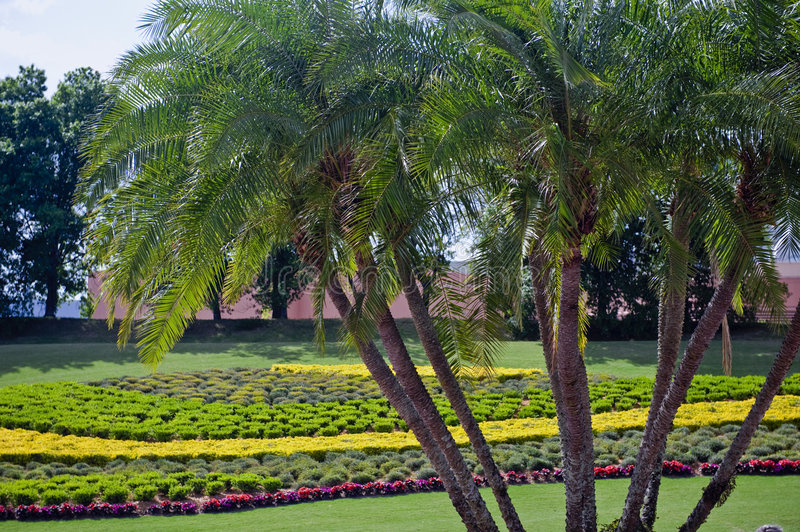 Palm trees and flower garden stock image