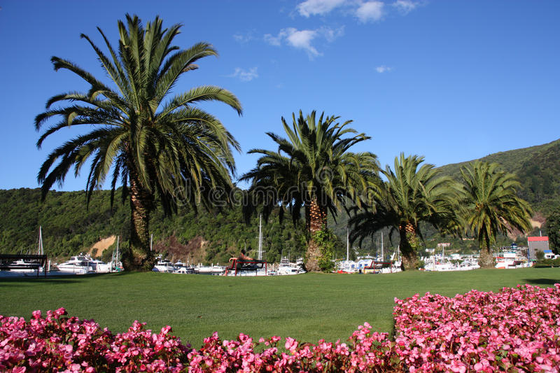 Download Palm trees and flowers stock photo. Image of coastal - 14851076