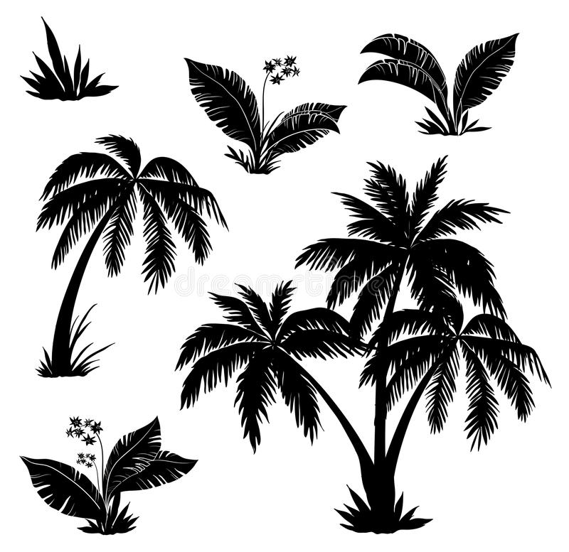 Palm trees, flowers and grass, silhouettes. Palm trees, flowers and grass, black silhouettes on white background stock illustration