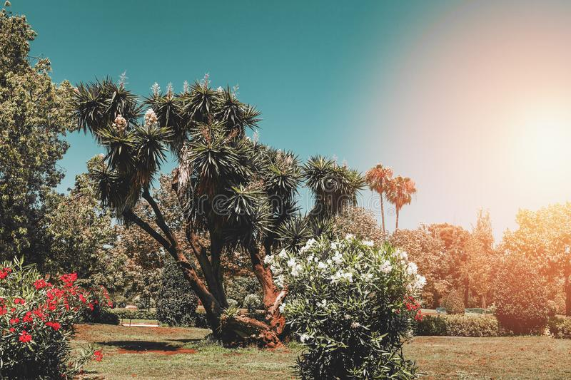 Palm trees with flowers at park, vintage toned, summer travel concept stock photo