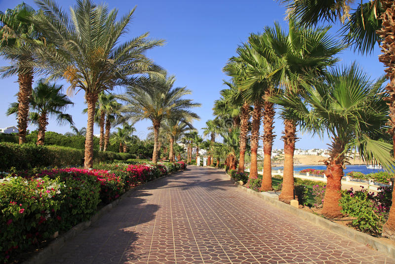 Palm trees and footway, Sharm el Sheikh, Egypt. Palm trees and footway in tropical garden on Red sea coast, Sharm el Sheikh, Egypt royalty free stock photos