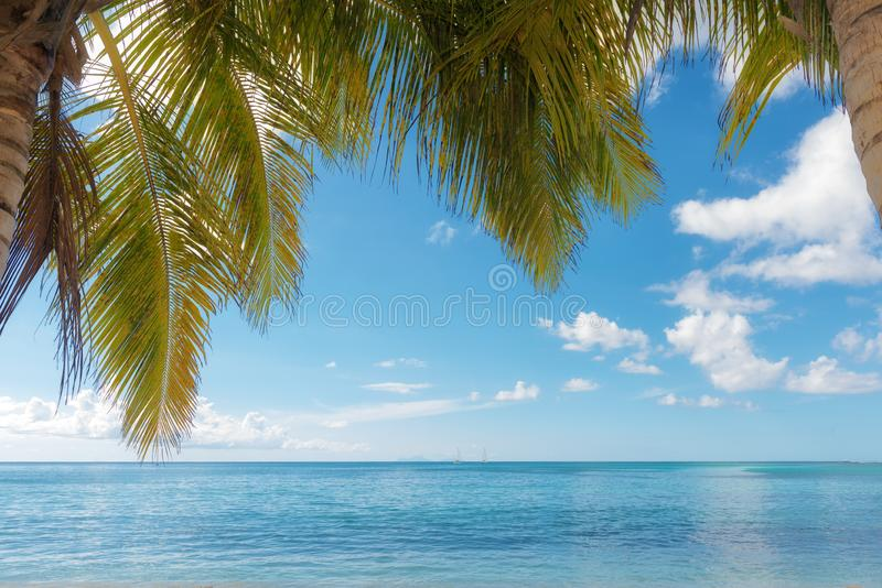 Palm trees foreground on calm tropical turquoise water background,. Blue cloudy sky,Saint Anne beach, Guadeloupe, French West Indies stock photo