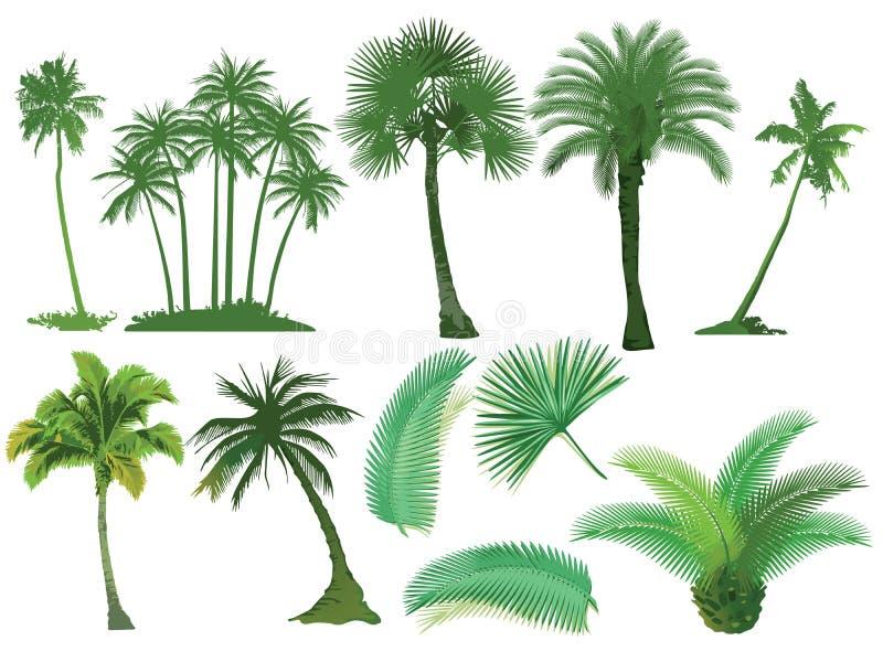Palm trees stock illustration