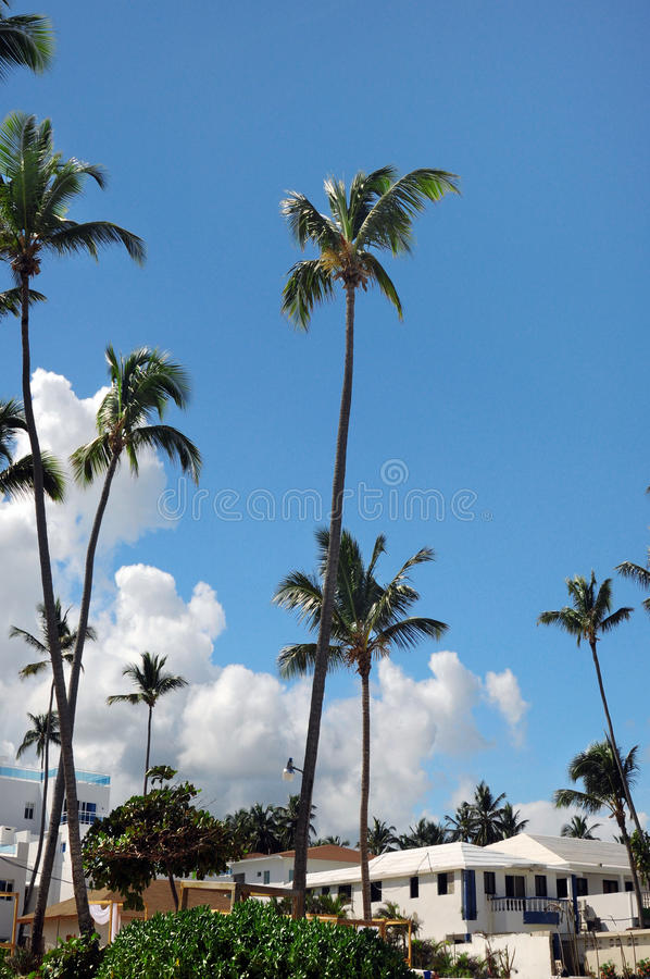 Download Palm Trees In Front Of Azure Skyline. Stock Images - Image: 23600744