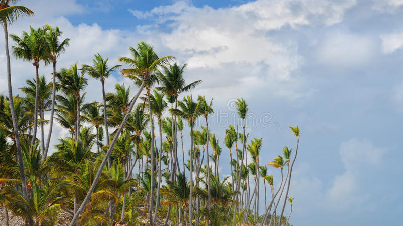 Download Palm Trees In Front Of Azure Skyline. Stock Photo - Image: 23601110